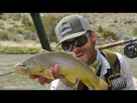 BROWN DRAGONS: Gunnison River Fly Fishing