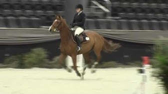 Video of WINKLEMAN ridden by DANA E. WILLE from ShowNet!