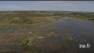 Brésil, Pantanal : élevage au Nhécolandia