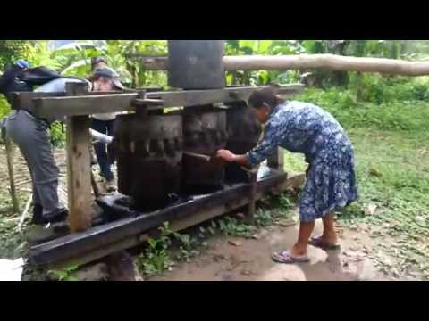 Squeezing sugarcane water with Inca technology (Villa Alzira, Madidi National Park, Bolivia)