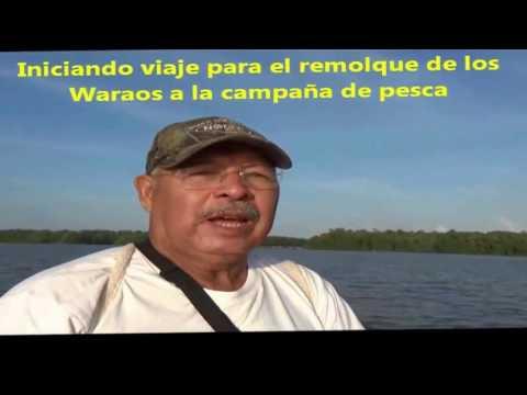 PESCA DE CURVINAS EN PEDERNALES DELTA AMACURO