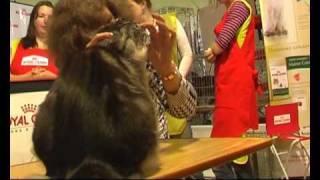Выставка кошек WCF ринг мейн кунов coonplanet.ru (4)