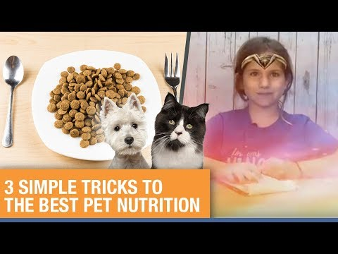 3 Simple Tricks to the Best Healthy Pet Nutrition