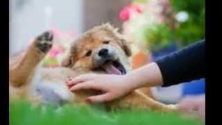Bobs Pet Stop Dog Training Services - Www.bobspetstop.com