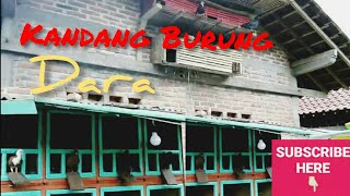 Video KANDANG BURUNG DARA download MP3, 3GP, MP4, WEBM, AVI, FLV Oktober 2018