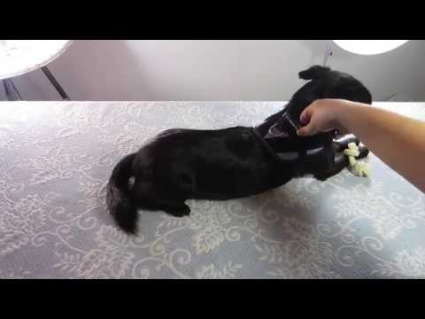 dog-gear:-reviewing-the-idc-power-harness-by-julius-k9