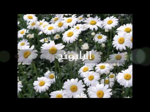 Arab Organization For Alternative Medicine - 05