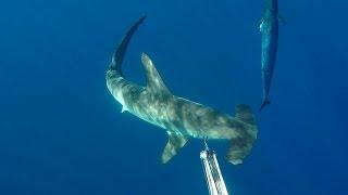 Pesca Submarina en Canarias 2016 - Sorpresas en el azul ( SHARK ENCOUNTER )