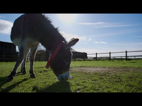 The Donkey Sanctuary - Visit South Devon