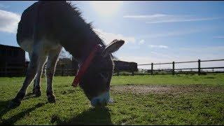 Visit The Donkey Sanctuary Sidmouth