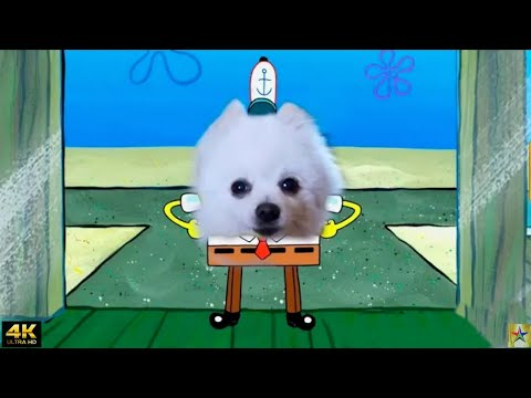 SpongeBob Square Pants [4K] | Singing Dog