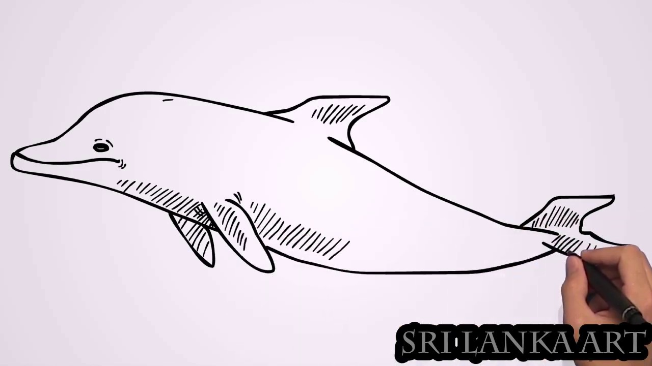 How to Easy Drawing Dolphin | Drawings Tutorials for Kids ...