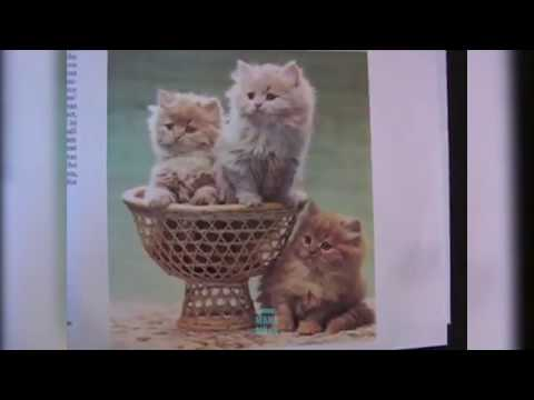 Cutest little girl's voice-over for cats' pictures