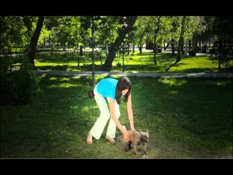 Команда «Рядом!»: как научить собаку, дрессировка и