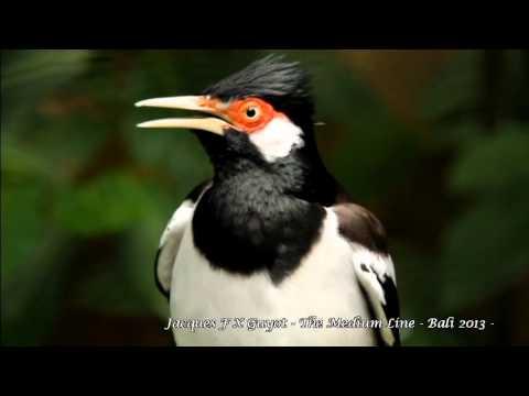 VillaGangga Bali Bird Song