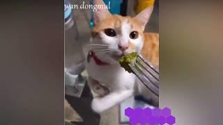 😍СМЕШНЫЕ КОТИКИ, ТОП ПРИКОЛЫ С ЖИВОТНЫМИ, cat funny cat коты и кошки приколы