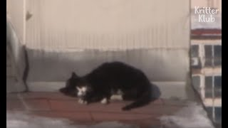 Cat On The Rooftop Puts Her Life In Danger | Kritter Klub