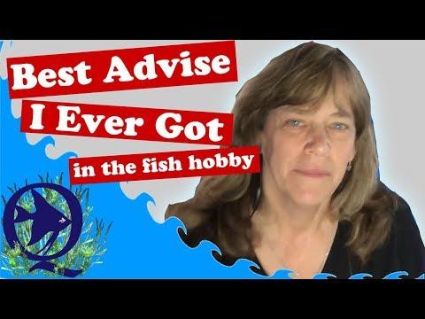 Why I Love my Local Fish Club. Bucks County Aquarium Society, BCAS Auction and Interviews