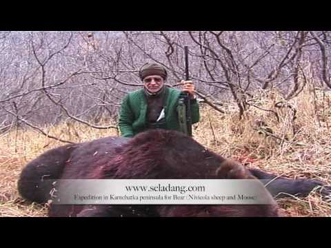 OURS BROWN BEAR HUNTING (Chasse) KAMCHATKA RUSSIA by Seladang