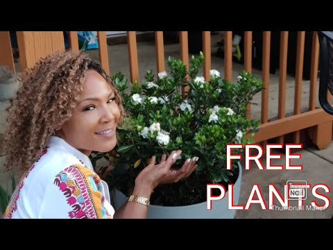 MY CHEAP GARDENING SECRETS & HOW To Get FREE Plants💐