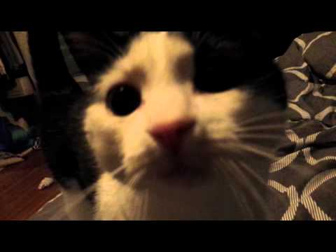 Cat jumping into the bed