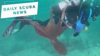 Daily Scuba News - Baby Kraken Attacks!