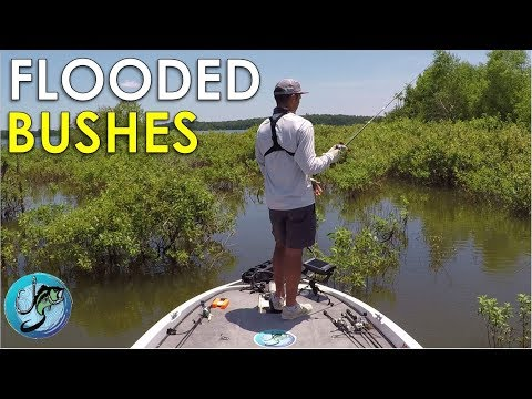 How To Fish Flooded Bushes For Summer Bass