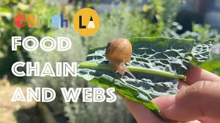 Lesson 7.  Food Chains and Webs