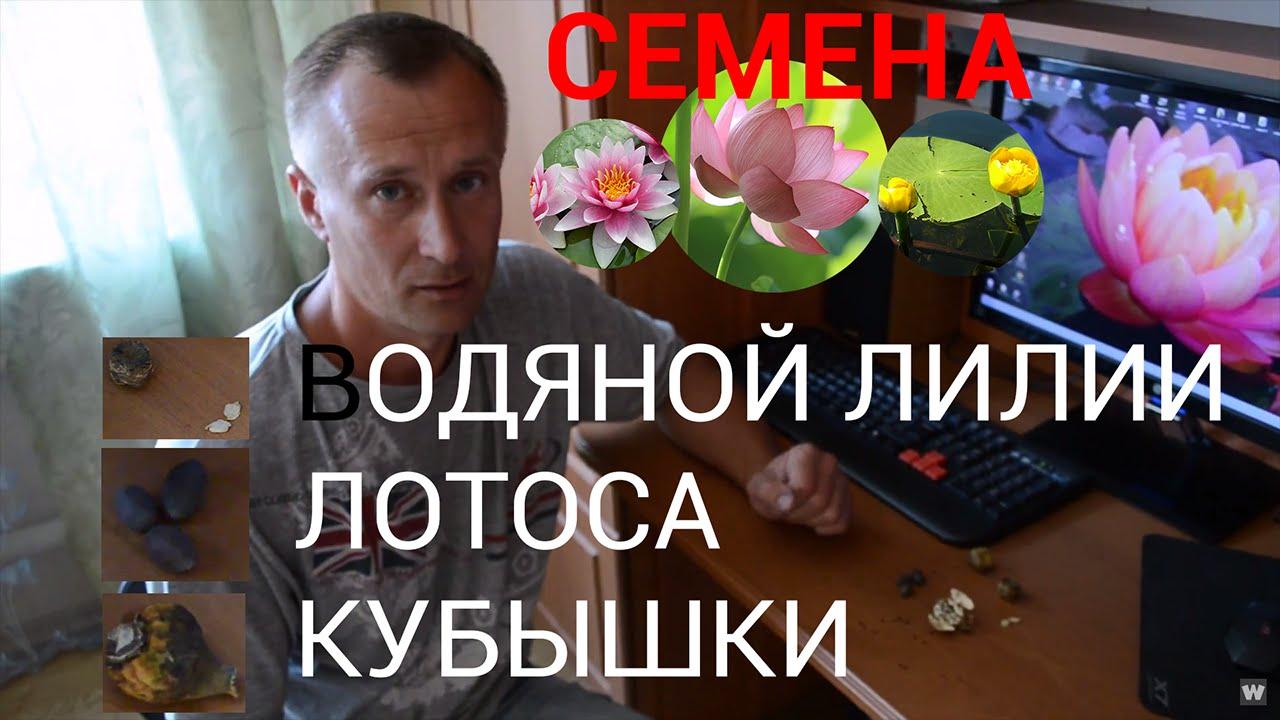 Лилии по доступной цене. Широкий ассортимент семян и саженцев растений. Продажа и доставка по всей россии.