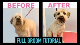 Wheaten Terrier Grooming Guide (FULL GROOM STEPBYSTEP)