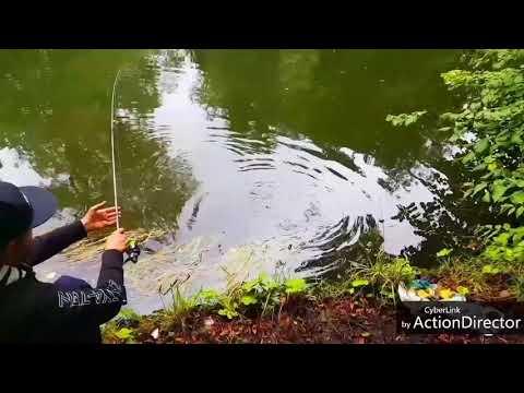 Pike fishing &  Ireland treasure