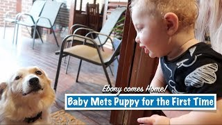 BABY Meets PUPPY For The First Time | EBONY Comes HOME