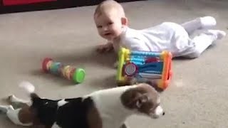 Watch Family Dog Teach Baby Bestie to Crawl