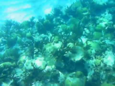 Offshore Snorkel 3 Bermuda