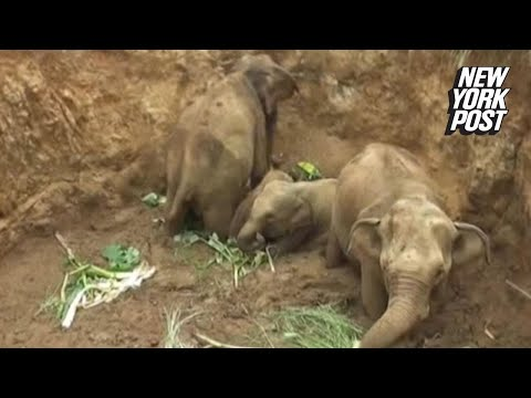Workers desperately dig baby elephants out of well | New York Post