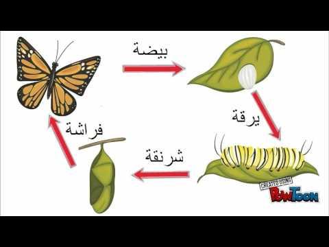 دورة حياة الحشرات Youtube