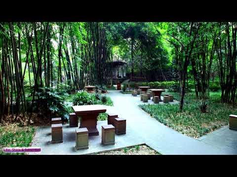 Music Relax Chinese|  Chinese Flute Music | Gentle Spirit | Sleep, Study, Relax, Meditation