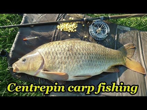 Centrepin Carp Fishing