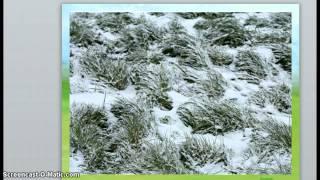 Зелёные растения под снегом