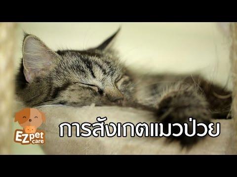 EZ pet care [by Mahidol] การสังเกตแมวป่วย