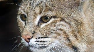 Девушка спасла беззащитного котика, но держать его в квартире плохая идея.Ведь это совсем не котик!