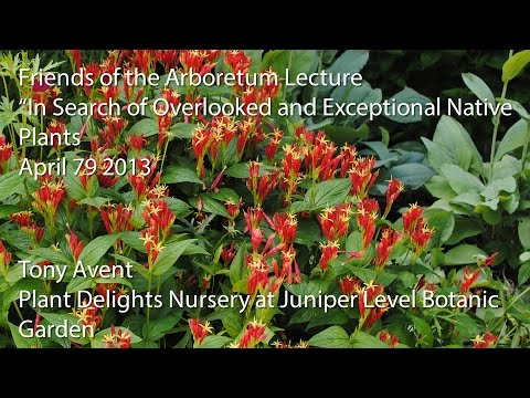 """""""In Search of Overlooked and Exceptional Native Plants"""""""