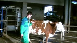 la vache 2.0