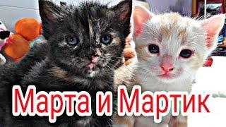 Котята Марта и Мартик.Первая еда.