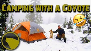 Overnight Backpacking | Winter camping with a dog in a rainstorm