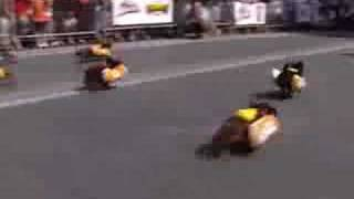 Video There's Nothing Like Wiener Dog Races! download MP3, 3GP, MP4, WEBM, AVI, FLV Juni 2018