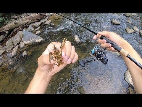 Fishing TINY Creek W/ LIVE Crawfish!!