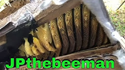 Bees In Da Couch