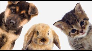 Все о животных 3
