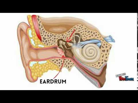 smallest bone in your body - youtube, Cephalic Vein